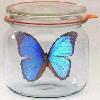 butterflyinglas userpic