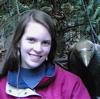 Corvus Torrey ravens