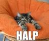 cat halp