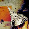 anilineinpearls userpic