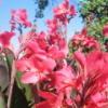 Цветы :)