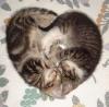 Doctor Science: kitten heart