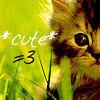 *shrugs*: Cute kitten. Awww!