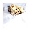default | serenity of a kitten