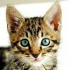 bodldops: cute kitten
