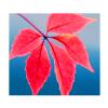 _______junkmail userpic