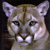 catamount3 userpic