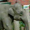 orvieth userpic