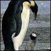 penguin_sama