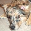 ragsdogs userpic
