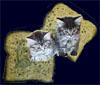 kittiesontoast userpic