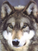 wolf_dealer userpic