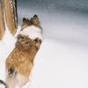 zortrana: Sprite vs. snow drift