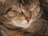 lesshour userpic