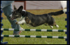 Nikita Jumping
