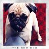 Lisa Yaeger: newdog