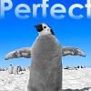 pairatime: Pinguine