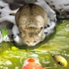 Poolside cat