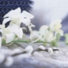 snow orchids