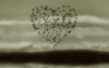 птичье сердце