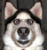 удивленный пес