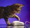 MadMax: cat
