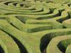study, maze