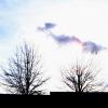 Trees/ Mrs. Lott