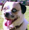 bernie_the_dog userpic
