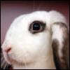 грустдный кролег бай му
