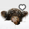 winter coo