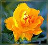 yellow_dance userpic