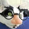 Wendy: Glasses on kitty
