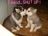 huskies, shut up