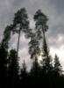 luhovici_2006