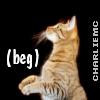 beg, cat begs