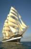 chat_maritime - он же chat_de_mer обыкновенный