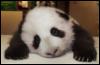 pandapony userpic