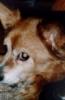 dassie2001