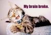 brain broke kitty