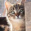 Безумная чудесная имбирная гулящая кошка: my eyes have seen you