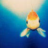 Fish/ look