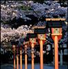 sakura beginning