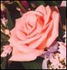 rickey_a: flower