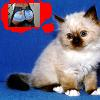 kittens_wishes userpic