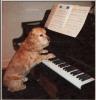 maestrodog