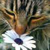 Marie Elizabeth: Gen: Kitty & Flower