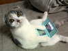 videogame kitty