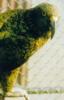 inquilinekea userpic