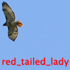 red_tailed_lady userpic